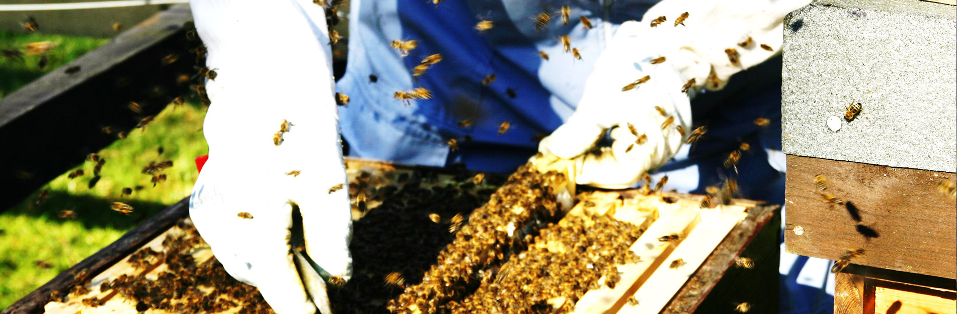 Go Pro, Beekeeping Video Wirral